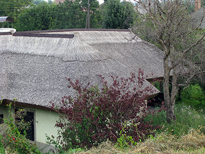 img_0060_1333thatchedroofsm