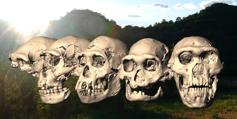 Homo erectus - the Dmanisi Site