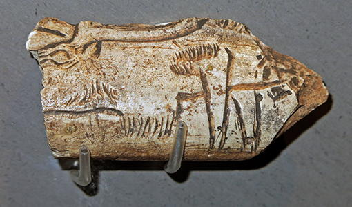 engraved reindeer on bone