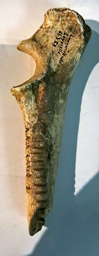 carved bone