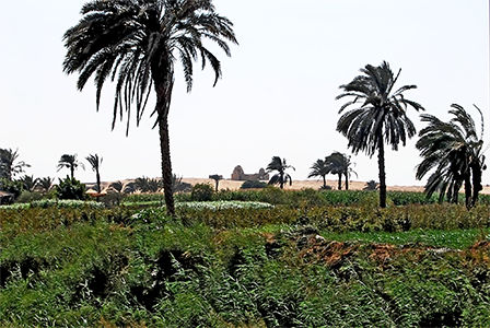 The Fayum Oasis