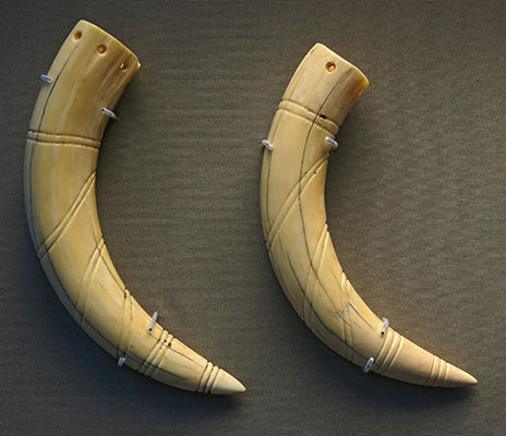 small tusks